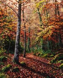 26. La Selva de lrati 46×38
