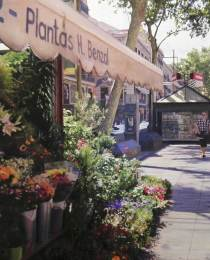 Ramblas-de-las-flores-73x54cm
